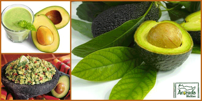 Αβοκαντο- απώλεια βάρους- διατροφή - fitness