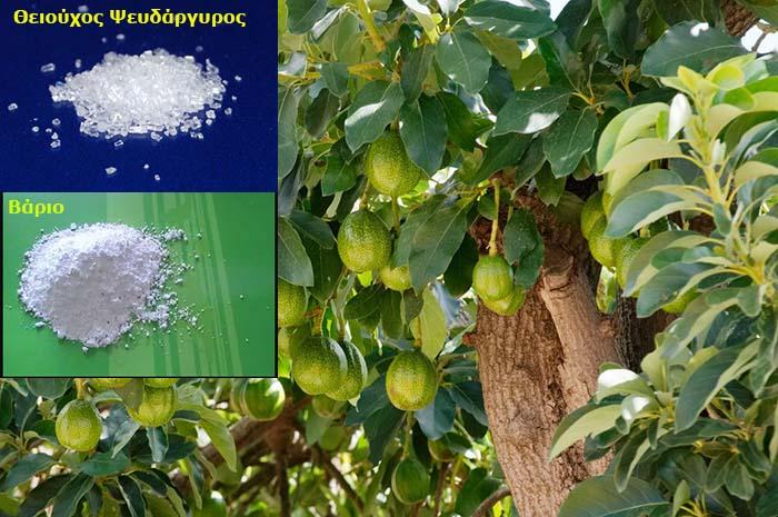Βάριο Ψευδάροσ Θειϊκός για λίπανση καλλιέργεια αβοκάντο